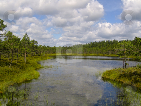 Lake scenery stock photo, A bog lake in the natural reserve of Meenikunno, in the South East of Estonia, with forest in the background and clouds reflecting in the water by Alessandro Rizzolli