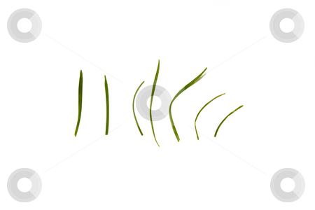 Isolated Grass stock photo, Isolated seven grass by Mehmet Dilsiz