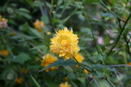 Flowers on the garden stock photo, Flowers on the garden by Minka Ruskova-Stefanova