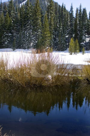 Trees on a Hill in Winter stock photo, Trees on a Hill with the River in the Frontwith Reflections by Mehmet Dilsiz