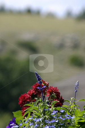 Flowers in the Garden stock photo, Flowers in the Garden with Blurry Mountain on the Background by Mehmet Dilsiz