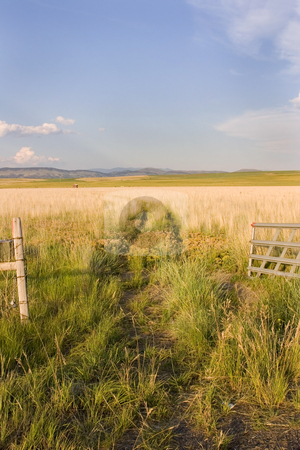 Open Gate to a Field with Clear Skies and a Small Shed stock photo, Open Gate to a Field with Clear Skies and a Small Shed in Helena Montana by Mehmet Dilsiz