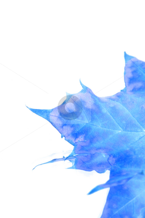 Isolated Blue Leaf stock photo, Isolated Blue Leaf - Inverted by Mehmet Dilsiz