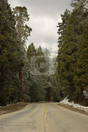 Snow in the Sierras 2 stock photo, A snow-lined road through the Sierra Nevada Mountains. by Kristine Keller