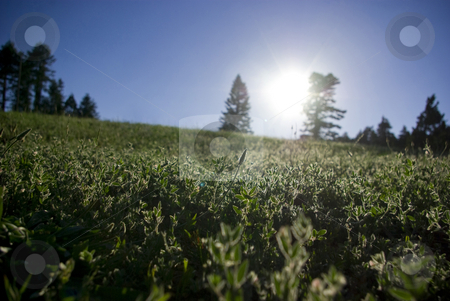 Forest Field stock photo, A green field in the high Sierras in the summertime. by Kristine Keller