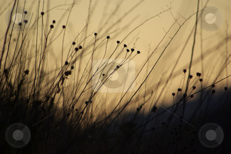 Grass at Dusk 2 stock photo,  by Kristine Keller