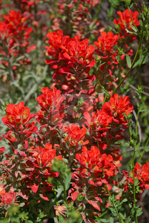 Red Wildflowers stock photo,  by Kristine Keller