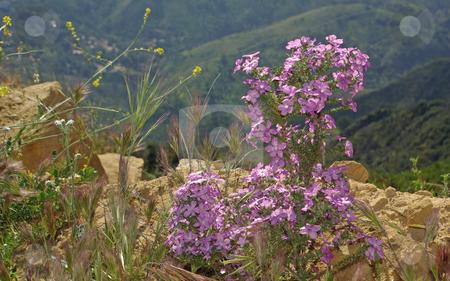 Purple Wildflowers stock photo,  by Kristine Keller