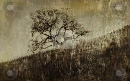 Antique Oak stock photo, An antique-styled view of an oak tree. by Kristine Keller