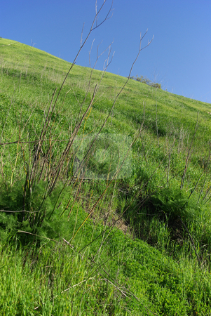 Grassy Hillside stock photo,  by Kristine Keller