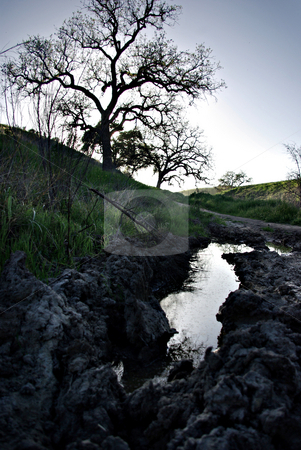 Puddle on a Trail stock photo, A puddle on a muddy trail in Southern California. by Kristine Keller
