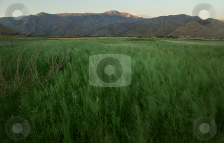 Grassy Field 1 stock photo,  by Kristine Keller