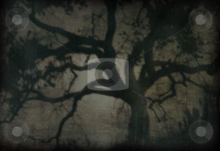 Creepy Oak 2 stock photo, An old-fashioned photo of an oak tree. by Kristine Keller