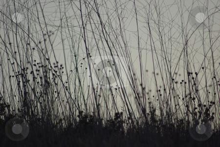 Grass at Dusk stock photo,  by Kristine Keller