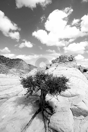 Close up on the Rocks with a Small Tree - Black and White stock photo, Snow Canyon in St. George, Utah - Close up on the Rocks by Mehmet Dilsiz