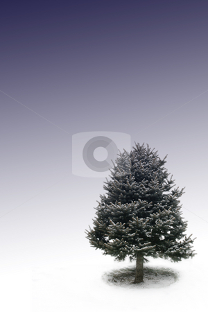 Tree with Bluebackground stock photo, One tree under bluebackground by Mehmet Dilsiz