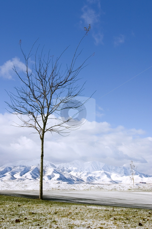 Tree in Winter stock photo, Mountain, Skies, Tree and it's Winter Time by Mehmet Dilsiz