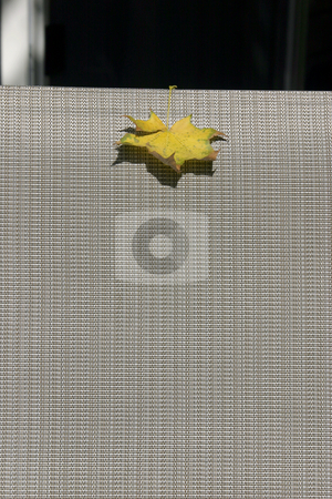 The Leaf on a Chair stock photo, Close Up - The Leaf Stuck on a Chair by Mehmet Dilsiz