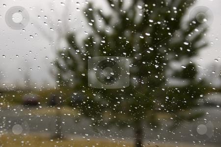 Rain Drops on the Windshield stock photo, Rain on the Windshield with the Green Tree on the Background by Mehmet Dilsiz
