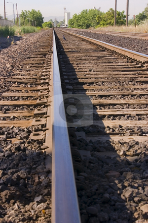 Bird on the Railroad Tracks stock photo, Close up on Railroad Tracks with a Bird in the middle by Mehmet Dilsiz
