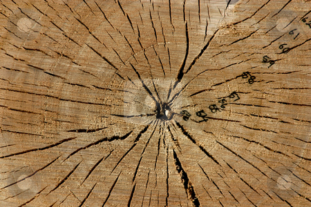Trunk Close Up stock photo, Close up on a Tree Trunk by Mehmet Dilsiz