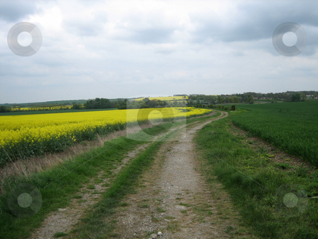 Winding path through rape fields stock photo, Winding path through rape fields by Stuart Atton