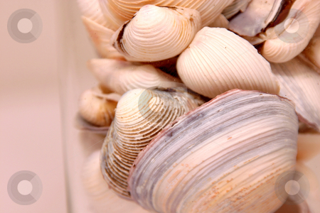 Seashells in the Glass stock photo, Seashells in a Glass Horizontal by Mehmet Dilsiz