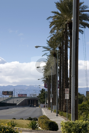 Road with Palm Trees and Light Posts in Las Vegas stock photo, Street Shot to the Highway with Palm Trees and Light Posts in Las Vegas by Mehmet Dilsiz
