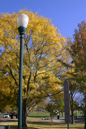 Trees and the Light Post in the Park stock photo, YellowTrees and the Light Post in the Park by Mehmet Dilsiz