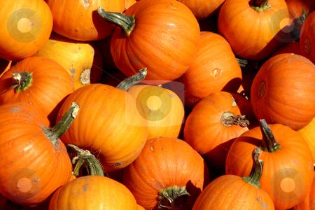 Up Close - Mini Pumpkins stock photo, Close up on a Mini Pumpkins by Mehmet Dilsiz