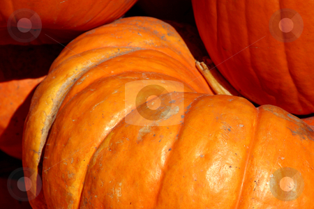 Up Close - 2 Pumpkins stock photo, Close up on two pumpkins on each other by Mehmet Dilsiz
