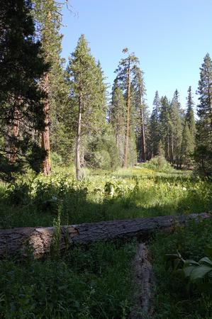 Meadow stock photo,  by Brett Horne
