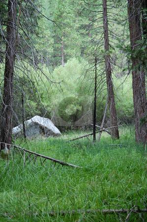 Forest grass stock photo,  by Brett Horne