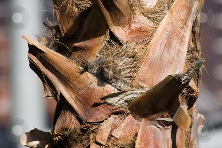 Close up on a Palm Tree stock photo, Horizontal - Close up on a Palm Tree... by Mehmet Dilsiz