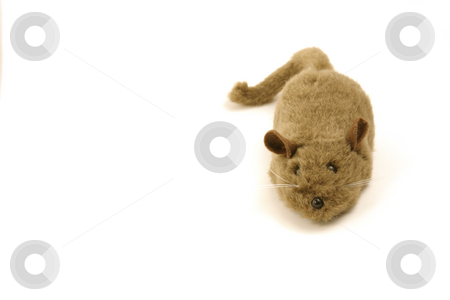 Isolated Toy - Mouse stock photo, Isolated Toy Mouse by Mehmet Dilsiz