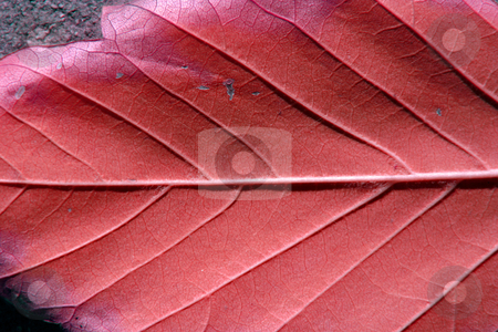 Up Close and Leaf stock photo, Close up on a Leaf by Mehmet Dilsiz