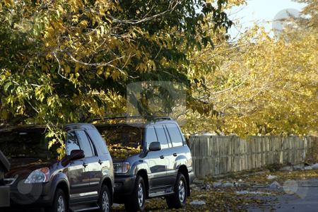 Two Cars under the Trees stock photo, Two Cars under the Trees in the Parking Lot by Mehmet Dilsiz