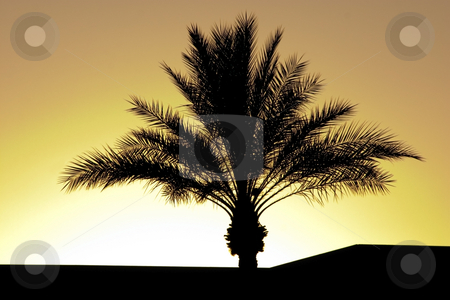 Palm Tree Silhouette During Sunset stock photo, Palm Tree Silhouette During Sunset by Mehmet Dilsiz