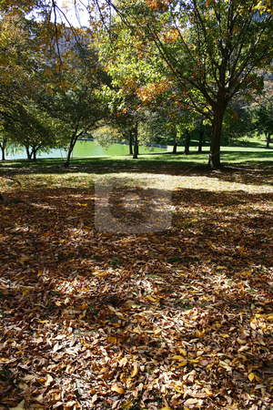 Fall and the Beautiful stock photo, Fall and the Beautiful - Leaves on the Ground by Mehmet Dilsiz