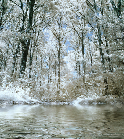 Infrared forest stock photo, Infrared panoramic picture of a beautiful forest with water reflection by Laurent Dambies