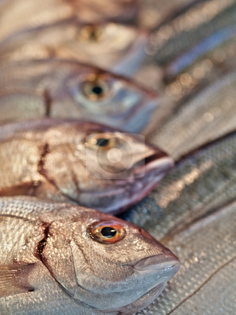 Sea bass fishes  at market for sale stock photo, Group of sea bass fishes on ice  displayed on a local market by Laurent Dambies