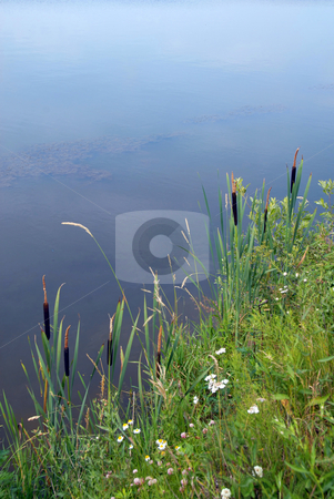 Rush by lake landscape stock photo, Rush in grass by tranquil lake landscape by Julija Sapic