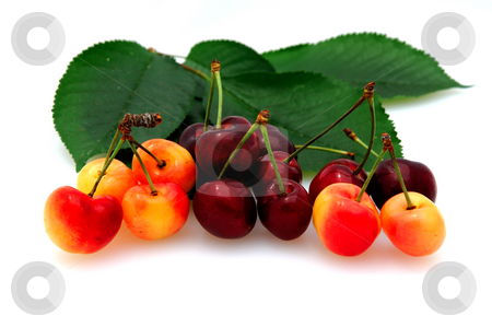 Bing And Rainier Cherries stock photo, Fresh picked bing and rainier cherries on a white background with cherry leaves by Lynn Bendickson