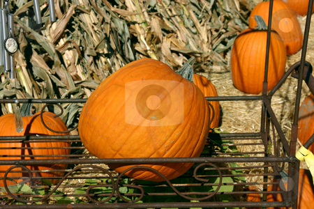 Pumpkin in a Flower Stand stock photo, Pumpkin in a Flower Stand in a market by Mehmet Dilsiz