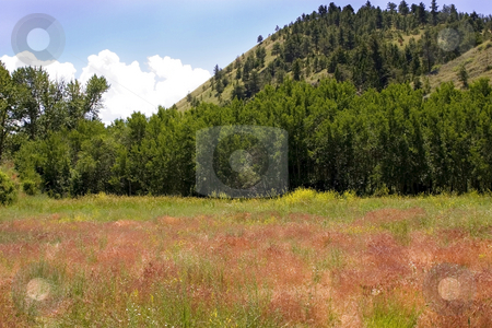 Country View in Helena Montana stock photo, Meadows and Country View in Helena Montana by Mehmet Dilsiz