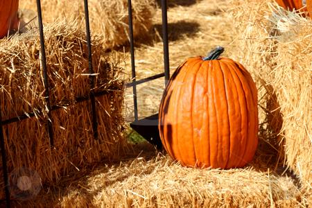 Up Close - Pumpkin stock photo, Close up on a Pumpkin Texture by Mehmet Dilsiz