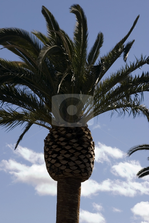 Palm Trees with Blue Skies stock photo, Palm Trees with Blue Skies as a Background by Mehmet Dilsiz