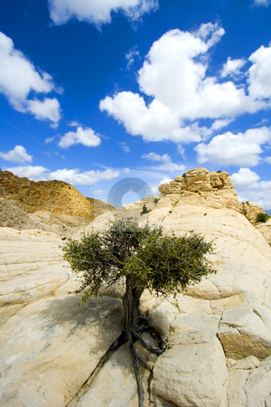 Close up on the Rocks with a Small Tree - Snow Canyon Utah stock photo, Snow Canyon in St. George, Utah - Close up on the Rocks by Mehmet Dilsiz