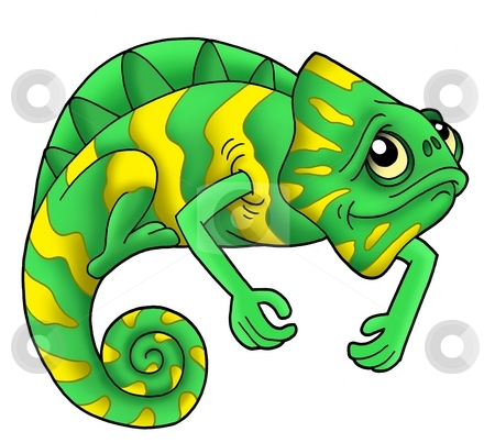 Green chameleon stock photo, Green chameleon on white background - color illustration. by Klara Viskova
