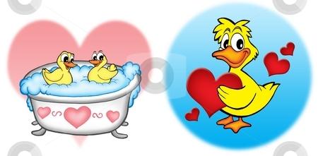 Ducks with hearts stock photo, Ducks with hearts - color illustration. by Klara Viskova